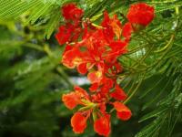 广州常见的植物有哪些