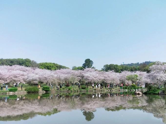 赏花东湖樱花园